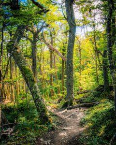 Árboles y bosque durante el atardecer